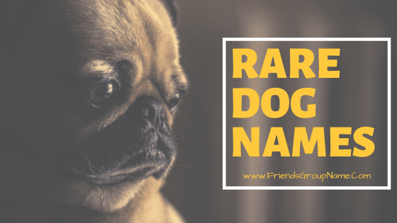 Rare Dog Names For Male And Female Name List 2020 Rare Dog Names Rare Dogs