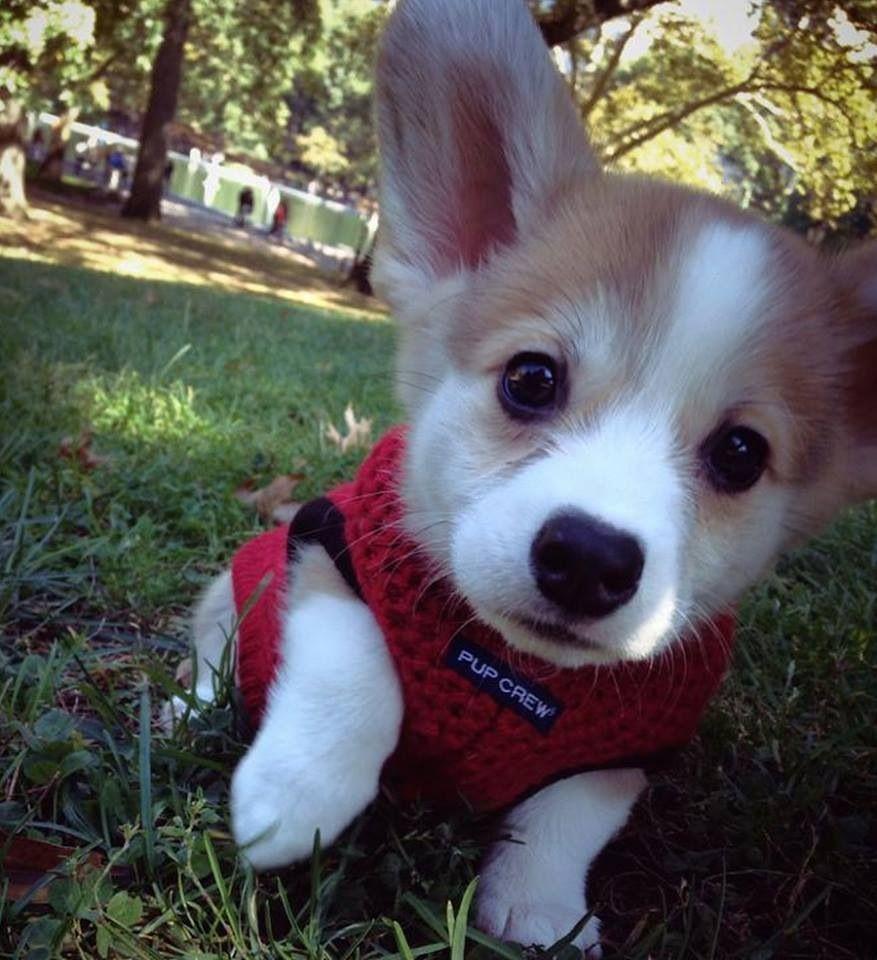Cutie pie Compliments of ilovedogs.tv