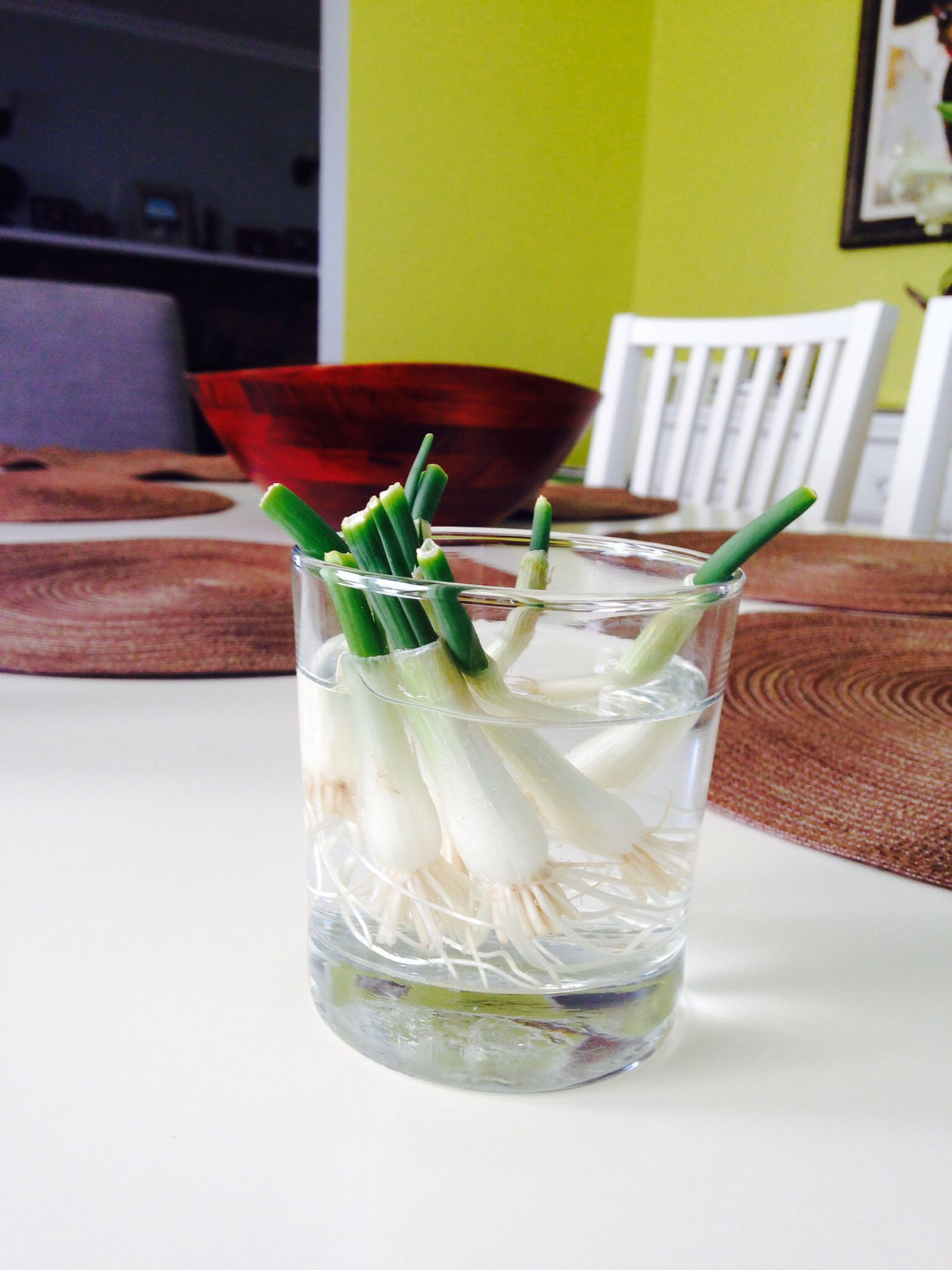 Regrow your old green onions!