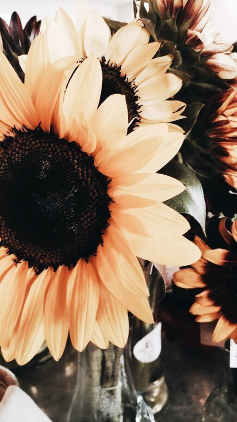 Iphone Wallpaper Tumblr Aesthetic Sunflowers 49 Ideas For 2019