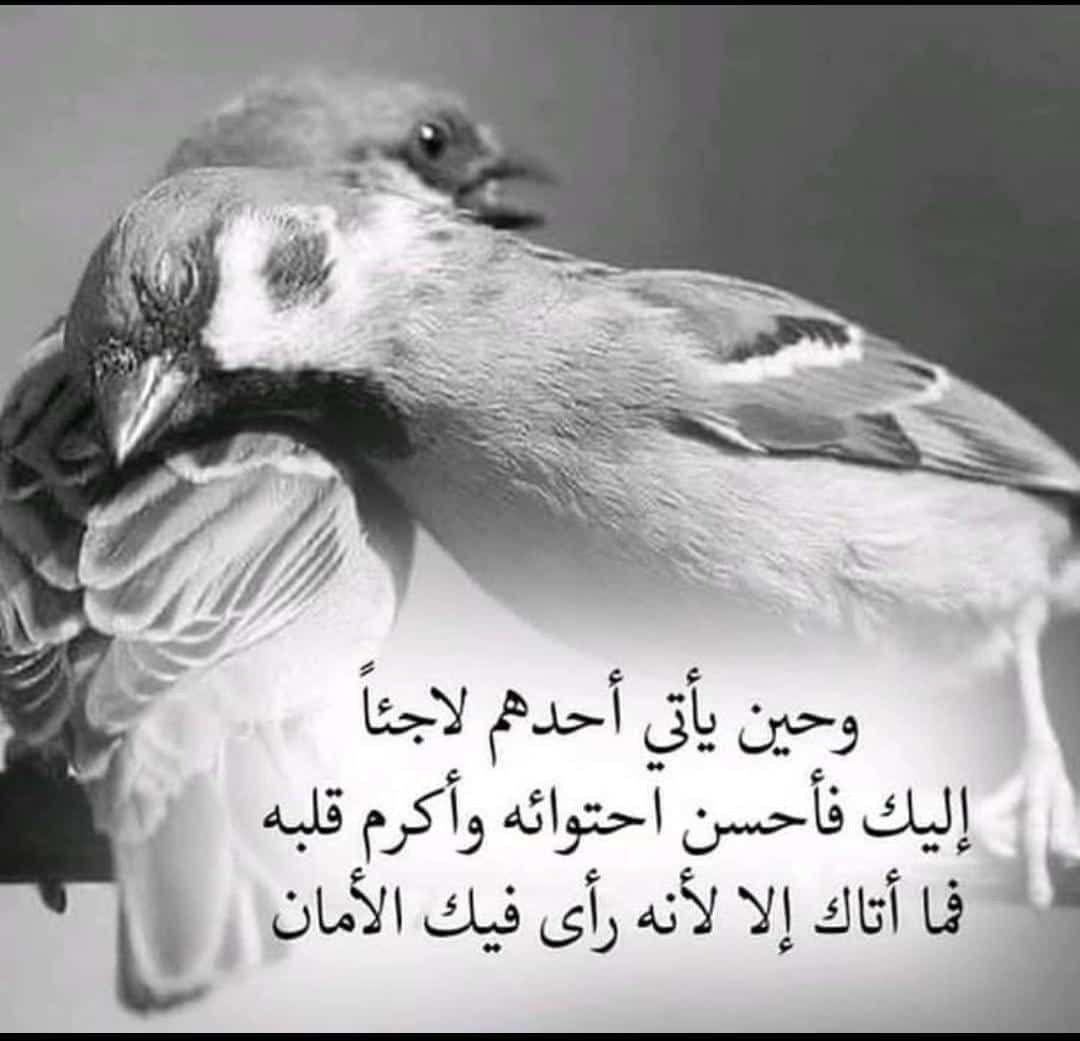 Pin By Ahmed On صورة شخصية In 2021 Animals Bird Owl