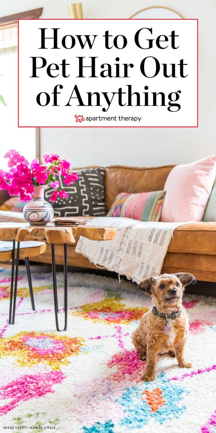 How To Remove Pet Hair From Furniture, Floors, and More