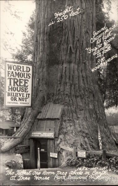 Famous Tree Houses world famous tree house redwood highway, california | memorable