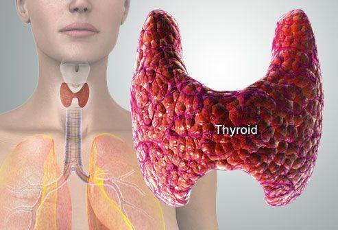 Illustration Of Thyroid Gland