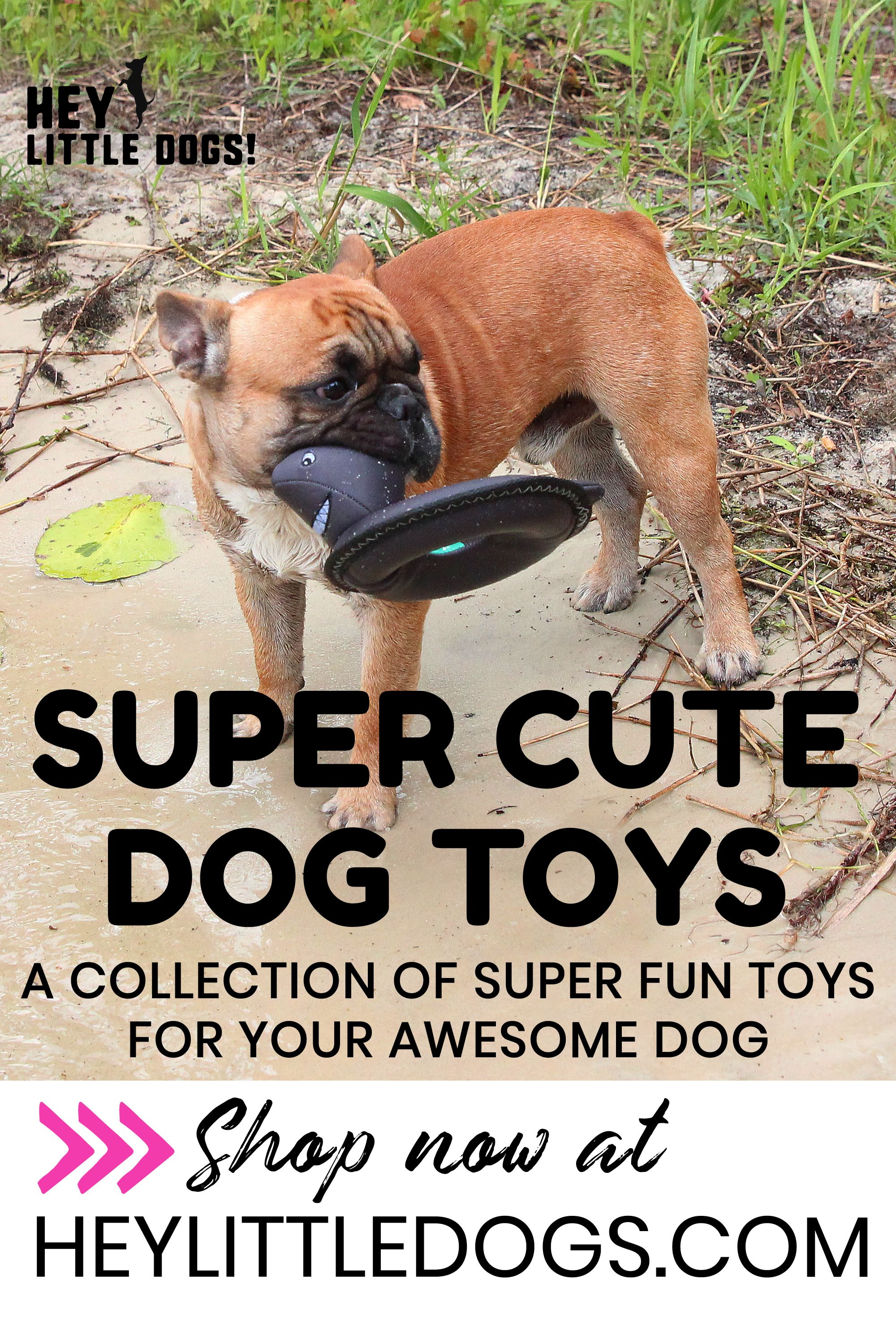 We Ve Got Many Types Of Toys To Keep Your Dog Occupied Having