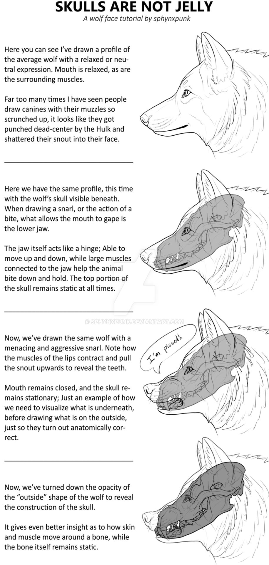Canine head mini-tutorial: SKULLS ARE NOT JELLY! by sphynxpunk | Art ...