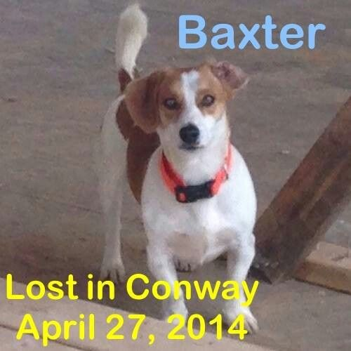 Lost In Conway Losing A Dog Lost Conway