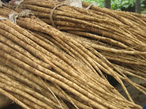Burdock root has often been used to purify the blood by removing toxins that can build up in blood. It can be taken orally or used topically as a remedy for skin disorders. Also, burdock root can be a diuretic or soothe aching joints.  burdock root in combination with cures for colds, measles, throat pain, and tonsillitis. Burdock root was also popular in Japan as a source of vitamins and other nutrients. In modern times, burdock root has been employed in the treatment of certain cancers.
