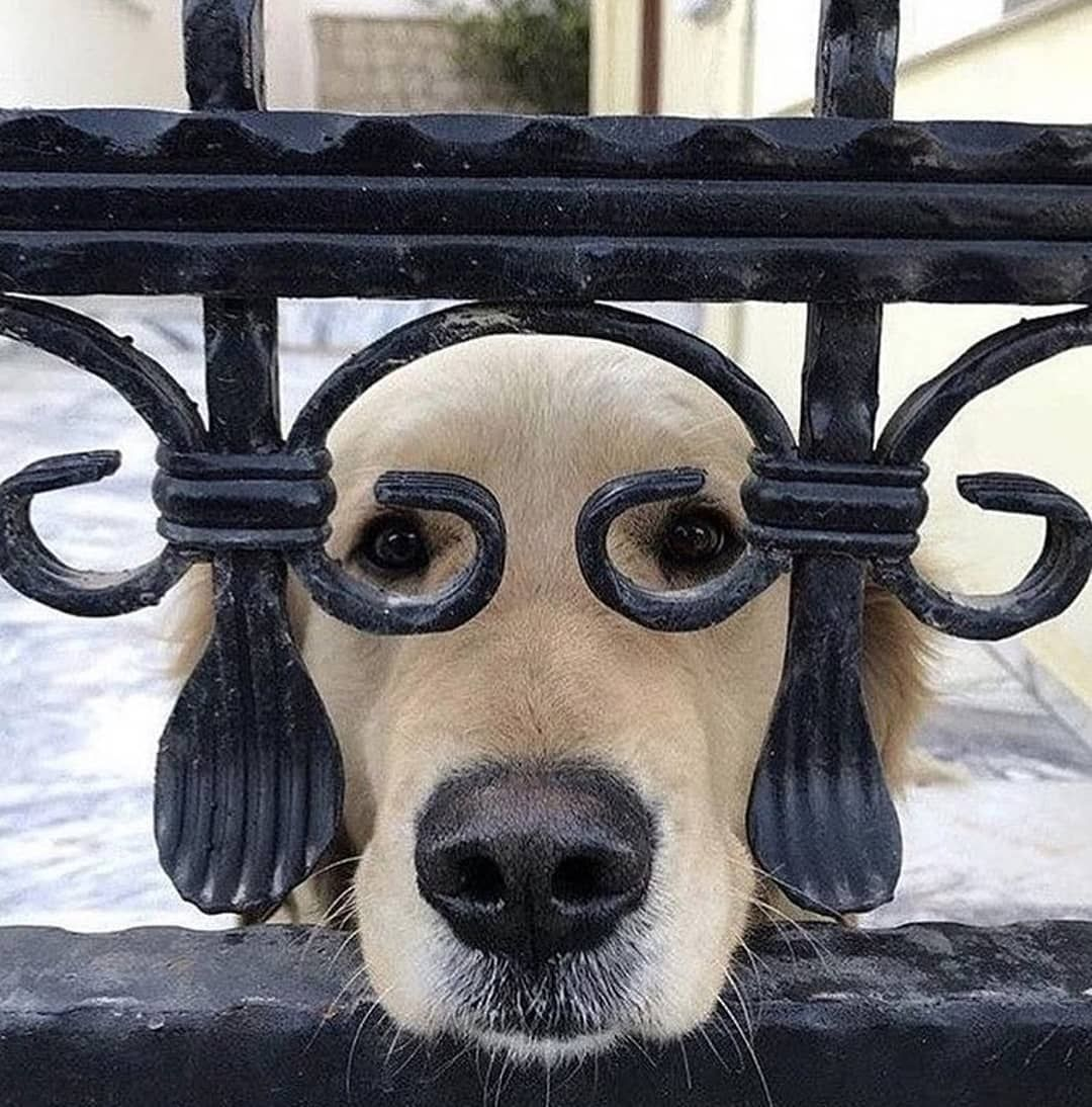 "Photo of Vouge Magazine on Instagram: ""Good morning #doglovers 🐶 @vouge__style #dogsofinstagram #dog"""