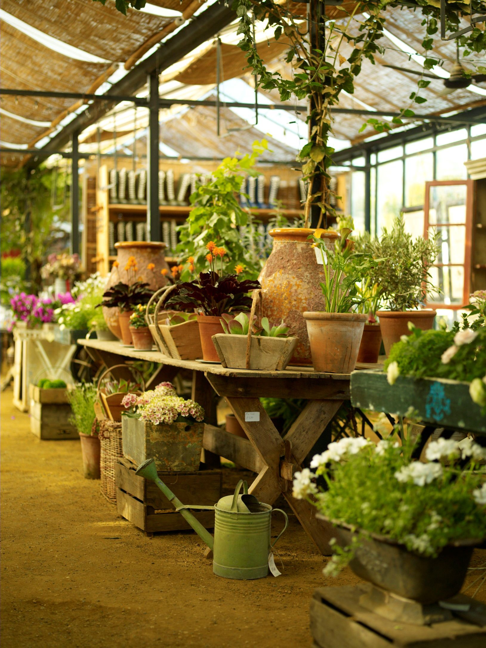Petersham Nurseries Garden Center Displays Botanical Gardens