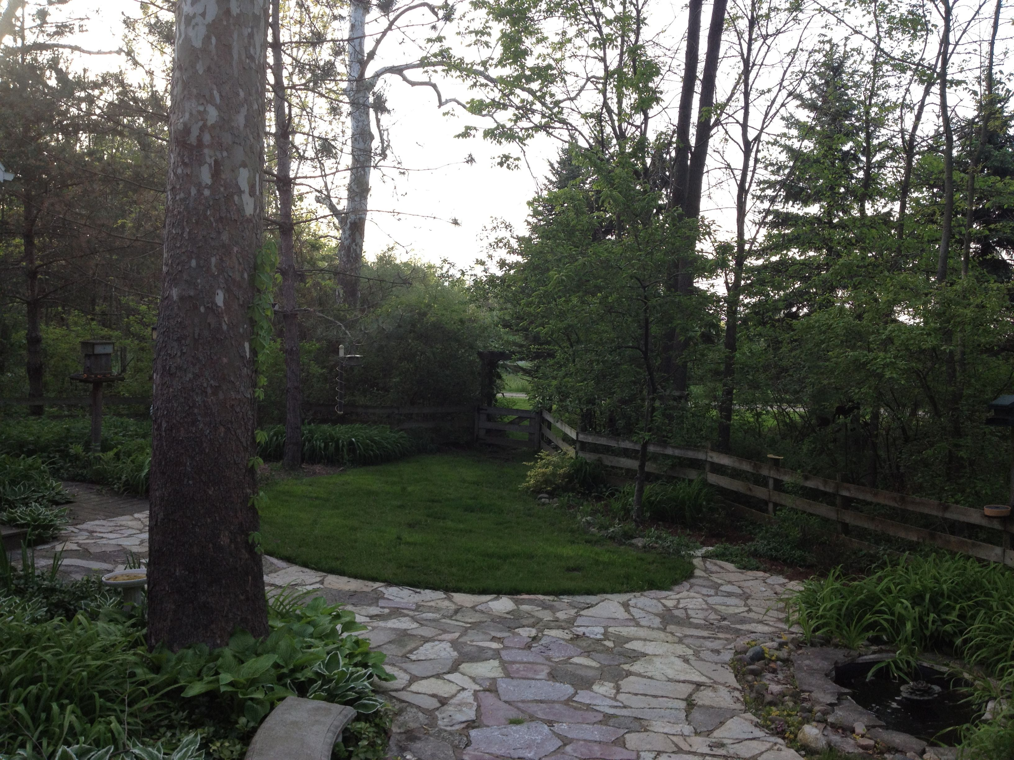 Another small frog pond in backyard. | Backyard, Plants ...