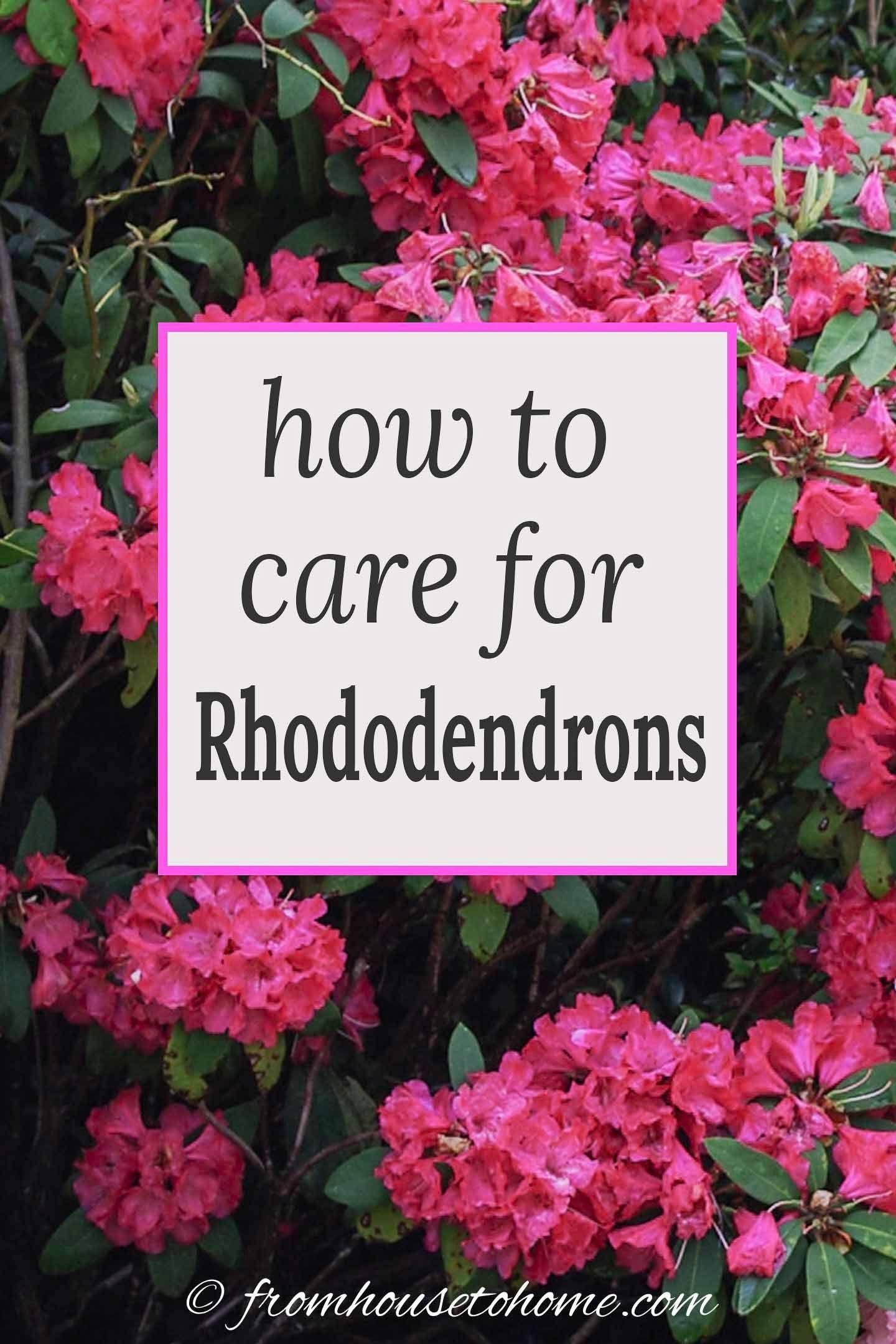 09894d707ffdca2da10ee75d5fb4c3dd - Best Gardens For Azaleas And Rhododendrons