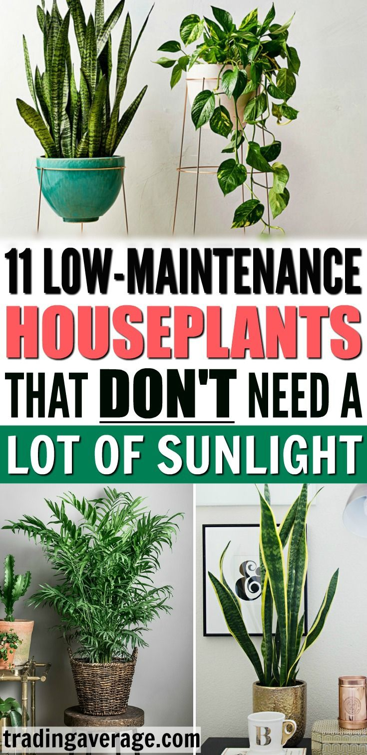 Looking For Houseplants That Don T Need Much Sunlight This Article Will Give You 11 Low Maintenance I Low Maintenance Indoor Plants House Plants Indoor Plants