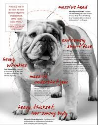 Image Result For Bull Dog Medical Medication For Dogs Bulldog