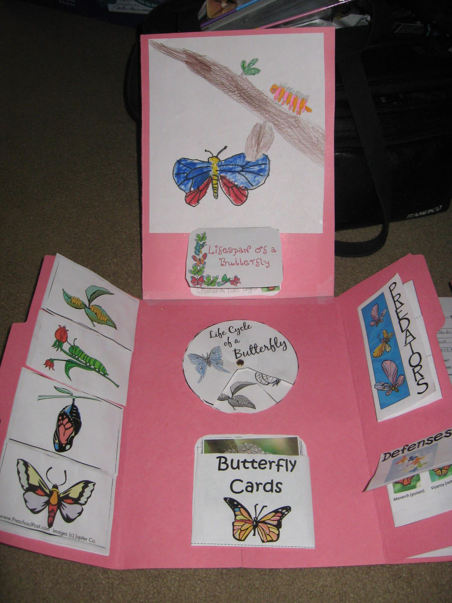Butterfly And Caterpillar Lapbook