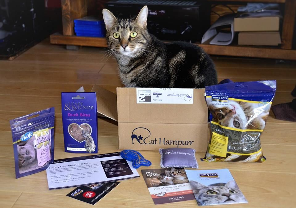 Thanks for another great cat hampurr, it even came with a handsome tabby!!