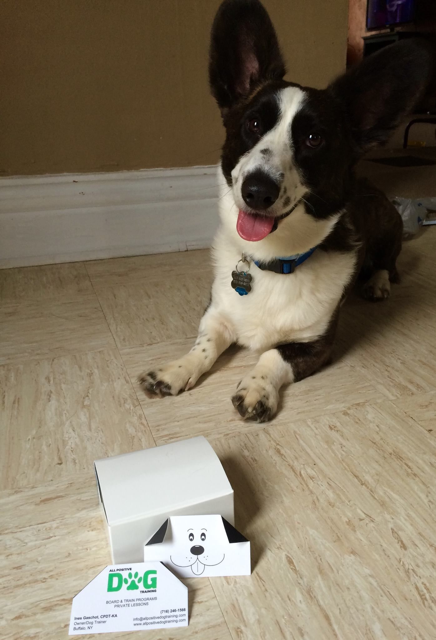 dog training business cards | K9 Solutions | Pinterest | Business ...