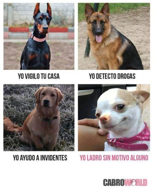 Perros Graciosos Http Enviarpostales Es Perros Graciosos 177 Perros Animales Pinterest Memes Memes Animal Crossing Funny
