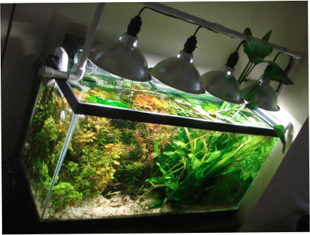 My Inexpensive Cfl Light Solution Page 10 Diy Fish Tank Aquarium Lighting Aquaponics