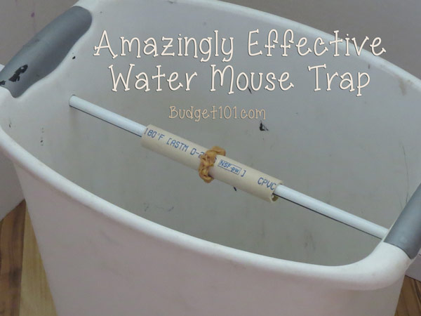 The Ultimate Bucket Mouse Trap in 2020 Mouse traps