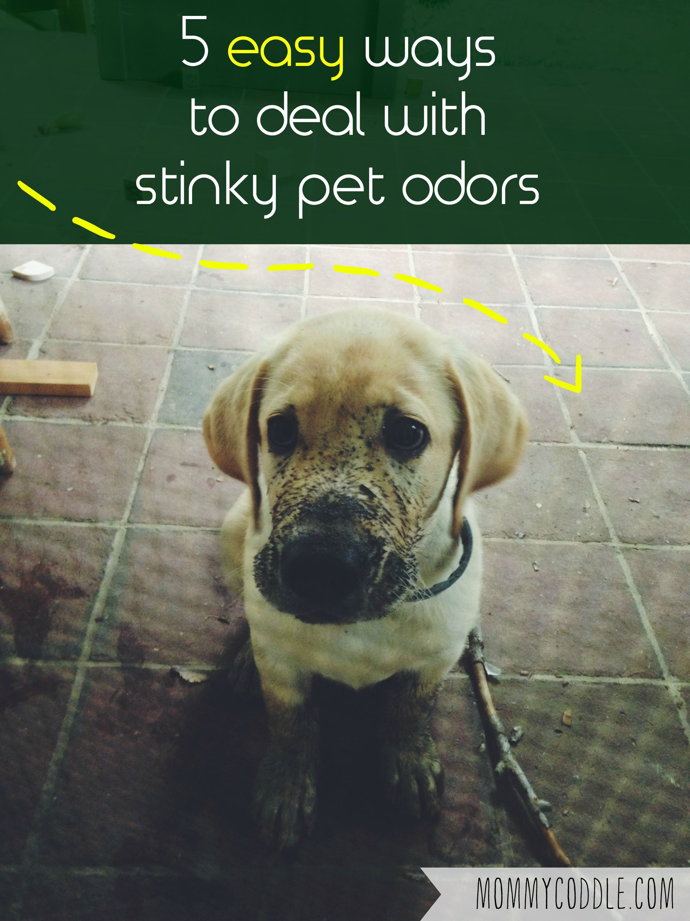 5 Ways To Fight Pet Odors In Your Home Pet Odors Pets Pet Odor