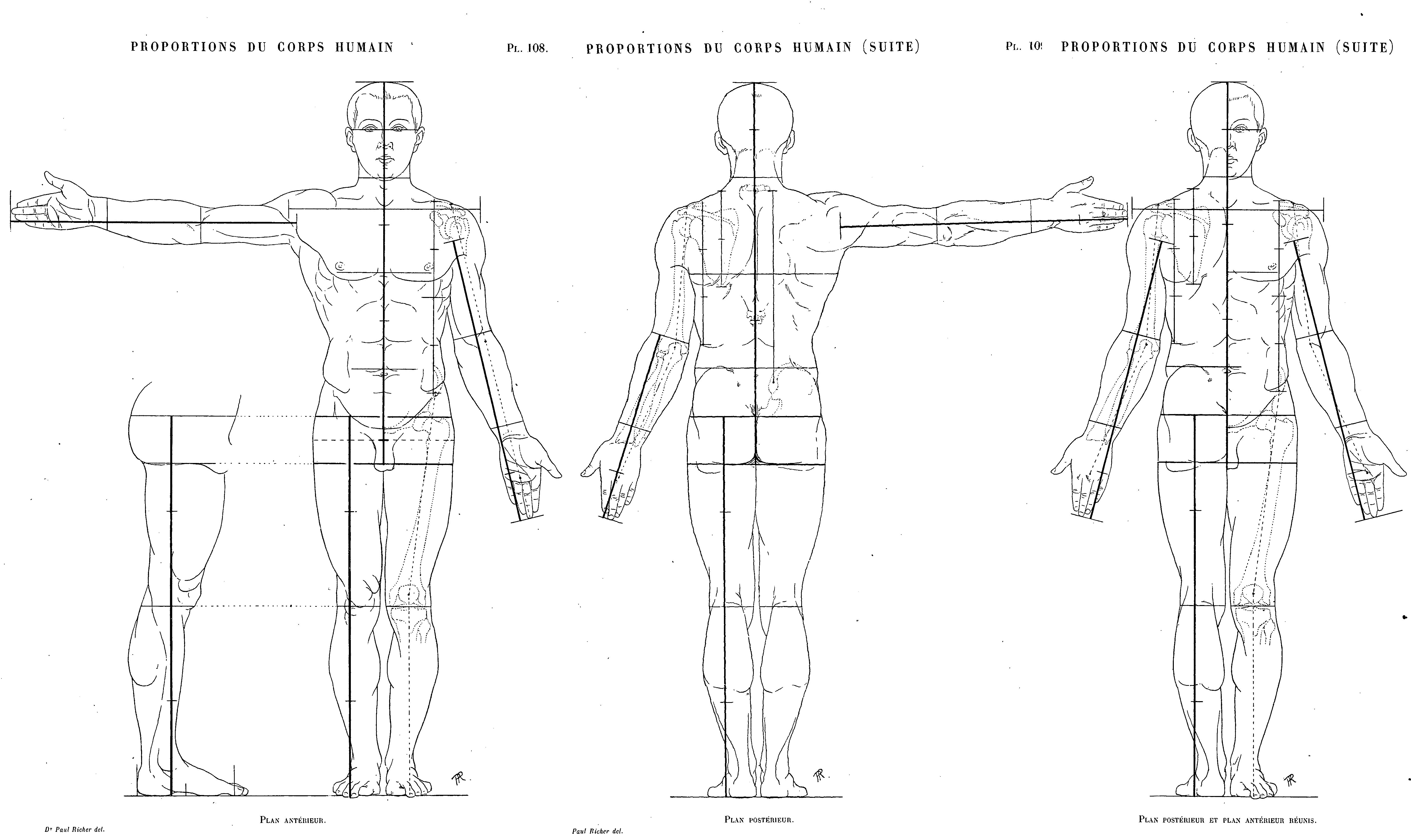 The best Average male Proportions chart by Paul Richer from the book ...