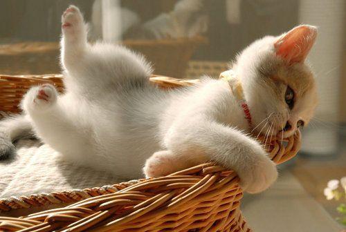 What a cute little kitten!