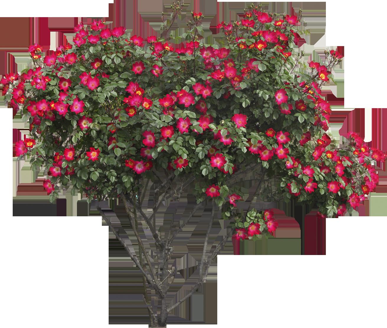 Bush Png Image Photoshop Landscape Plants Trees To Plant