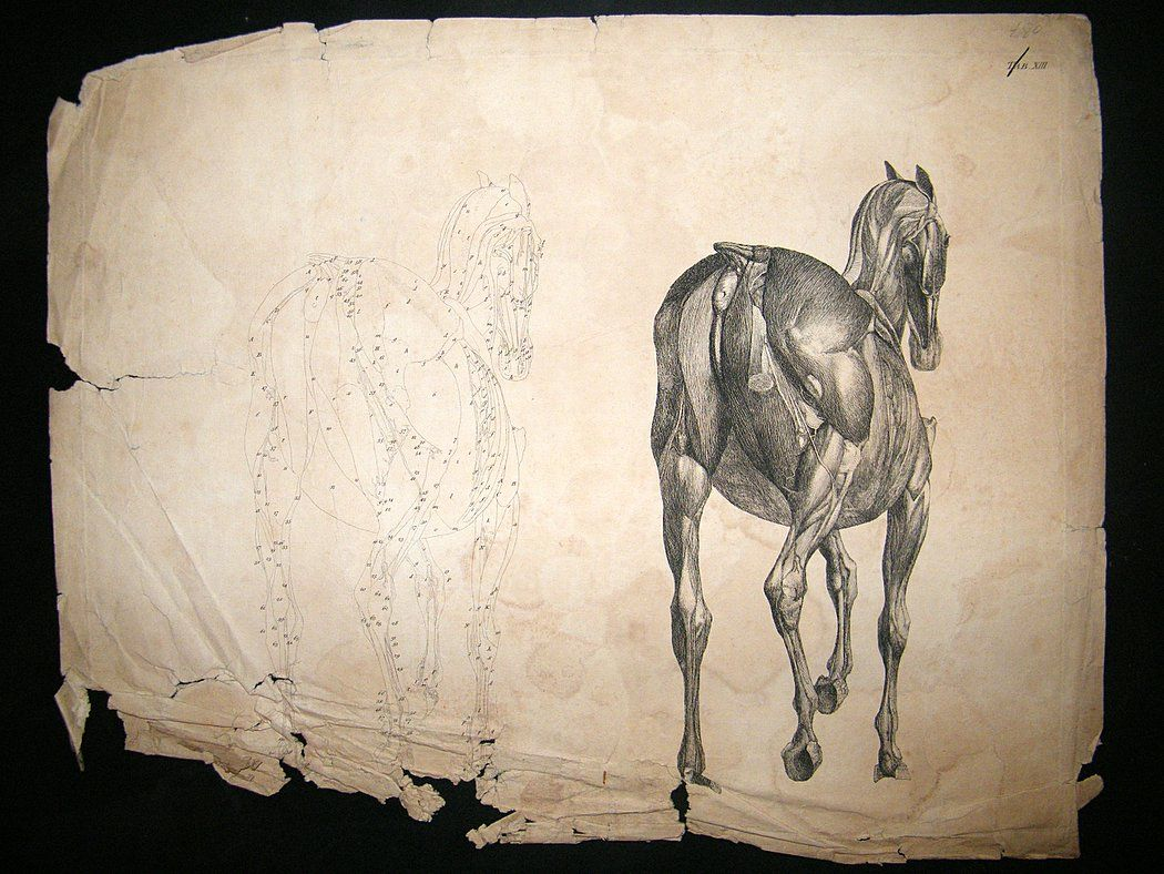 George Stubbs. Anatomy of the Horse. [this is just achingly ...