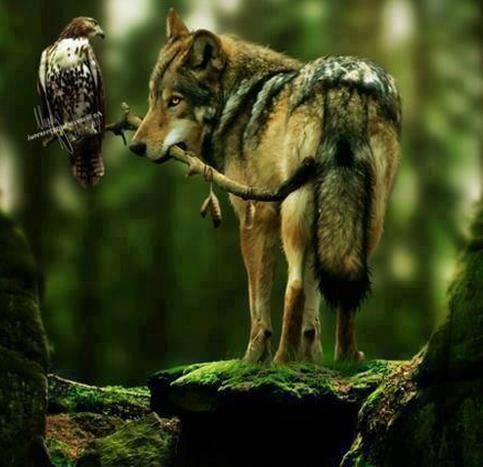 Wild and owl 2