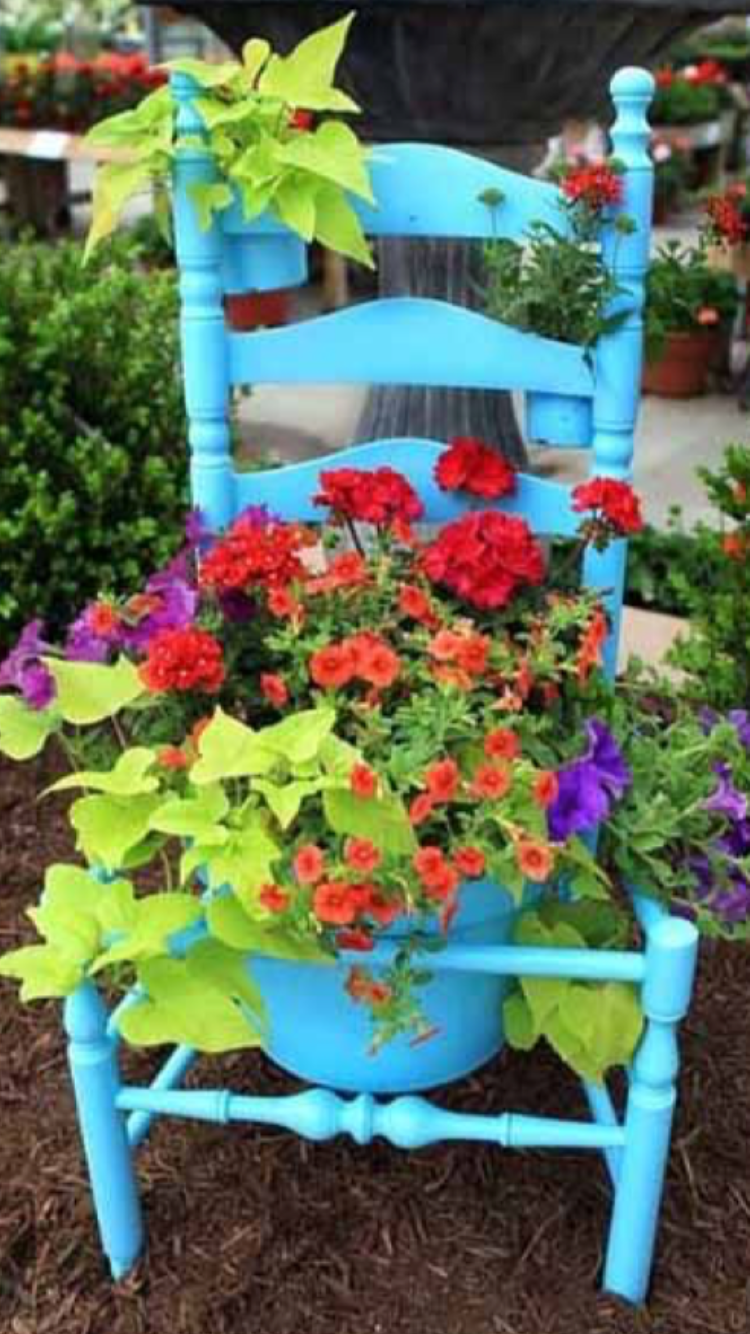 plants in photo sweet potato vine red verbena red on sweet dreams for your home plants decoration precautions and options id=27572