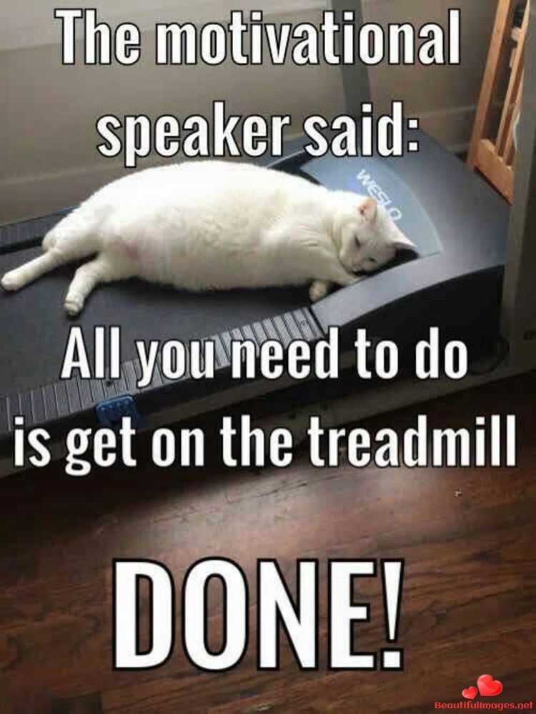 Download For Free Nice Funny Quotes For Facebook And Whatsapp Share To Your Friends Beautiful Images Quotes Pictures O Funny Animals Funny Cats White Cat Meme