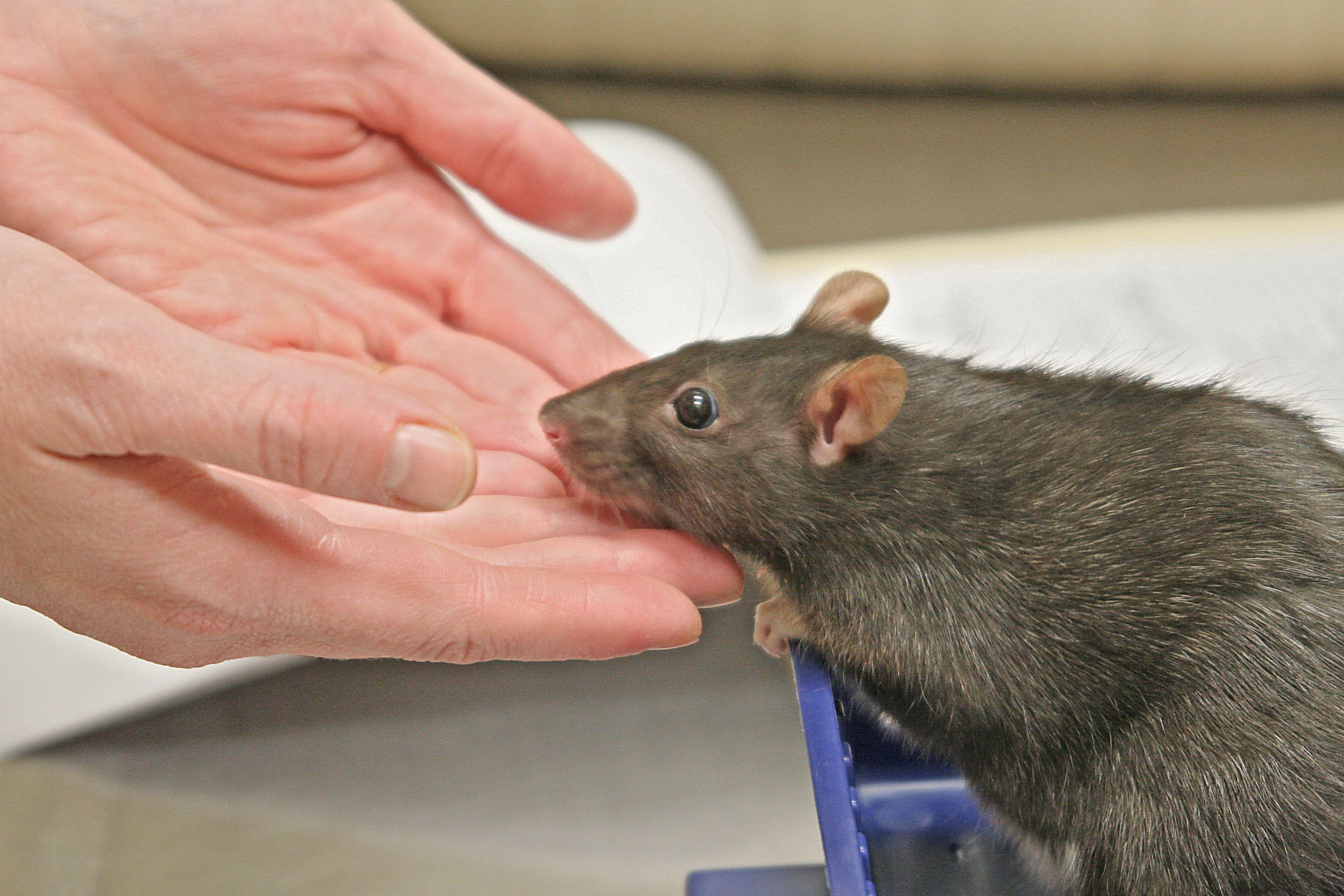 16++ Companion care animal hospital ideas in 2021