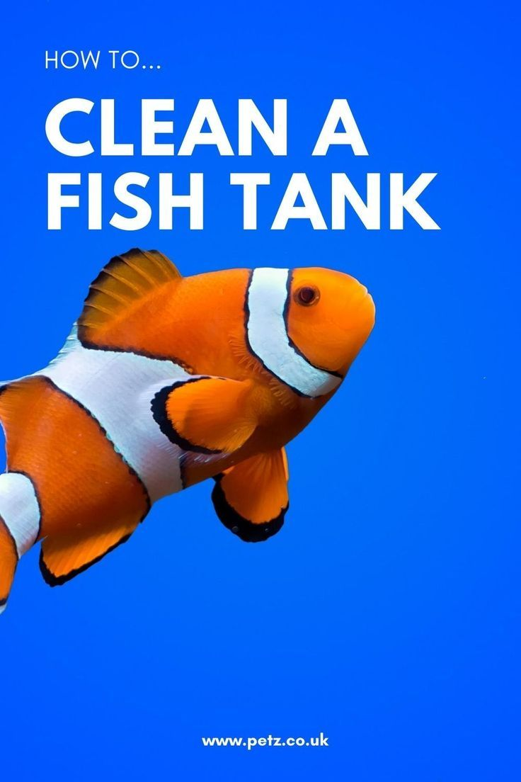 How To Clean A Fish Tank Petz In 2020 Fish Tank Cleaning Fish Tank Pet Fish