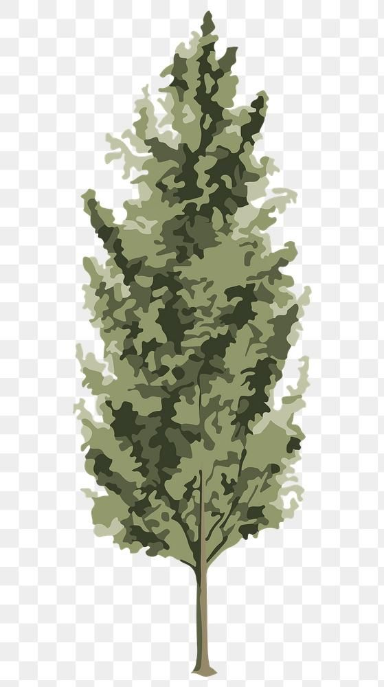 Download free png of Vectorized spruce tree sticker overlay design element