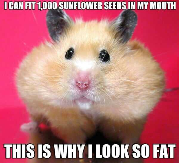 Hamsters Cute Animals Cute Animal Pictures Cute Hamsters