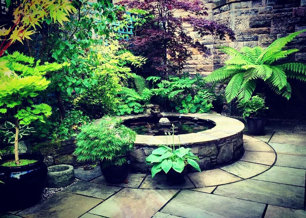 Lush courtyard garden design with New Zealand Tree Ferns ...