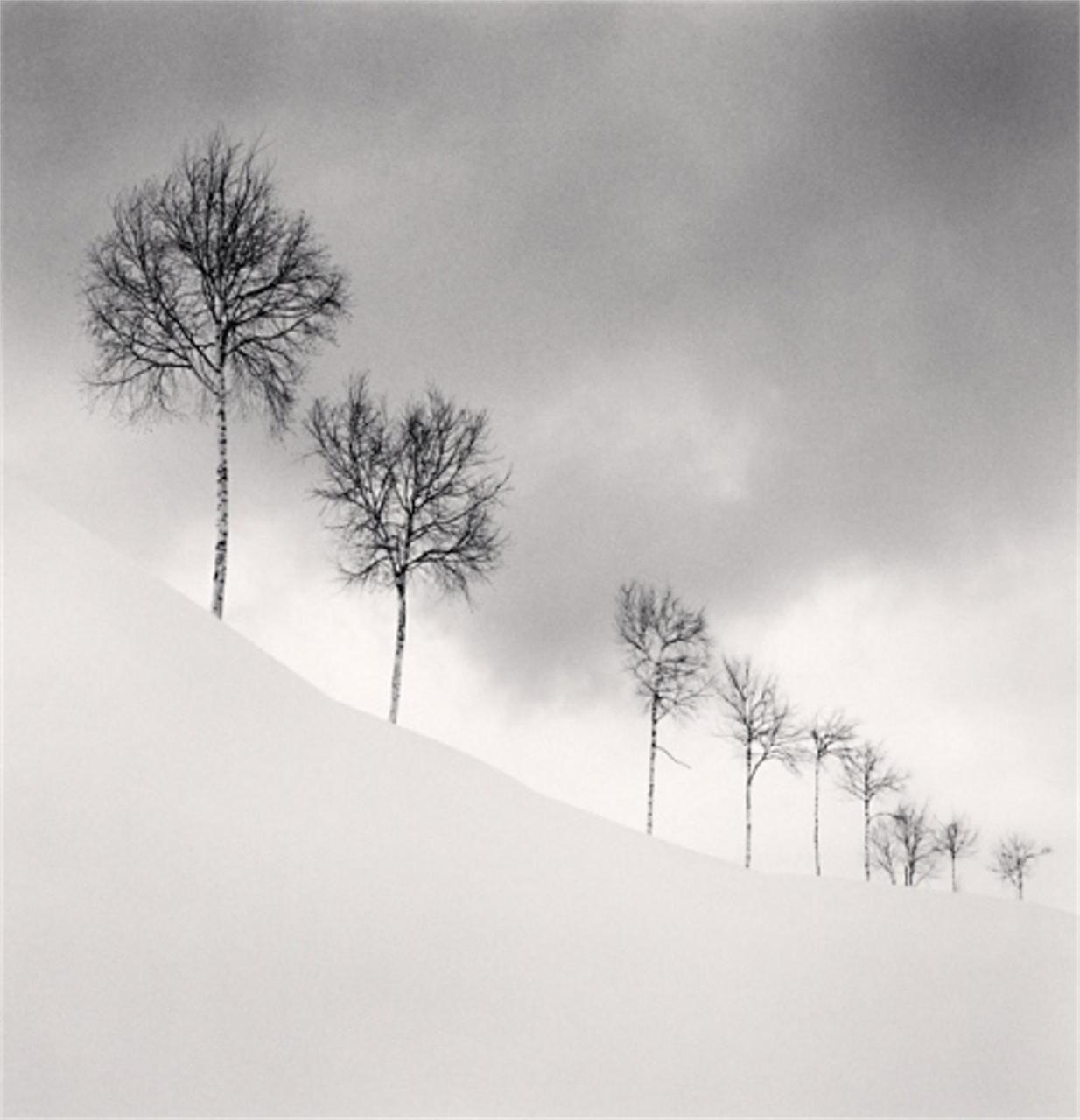 Nine silver birches shibetsu hokkaido japan 2009 by michael kenna