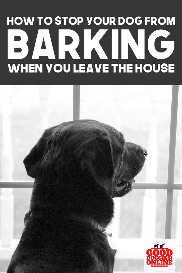 How To Stop A Dog From Barking When You Leave House Good Doggies Online Easiest Dogs To Train Dog Training Dog Training Obedience