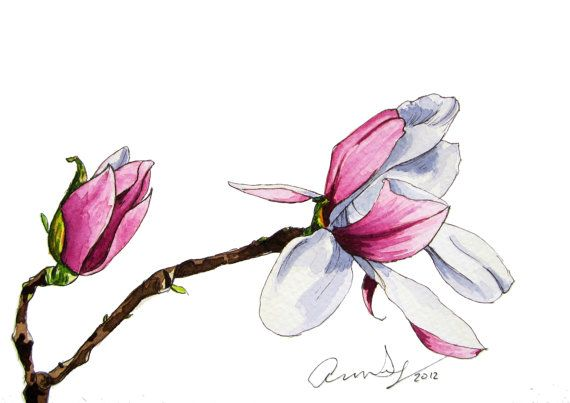 Watercolor Pink Magnolia Flower Watercolor Magnolia Watercolor Pink Flower Pink Magnolia Png Transparent Clipart Image And Psd File For Free Download Flower Painting Magnolia Flower Flower Drawing
