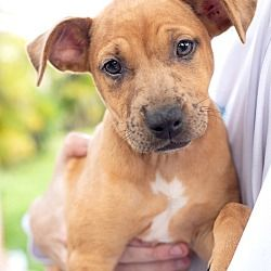 Available Pets At Born Free Pet Shelter In Key Biscayne Florida