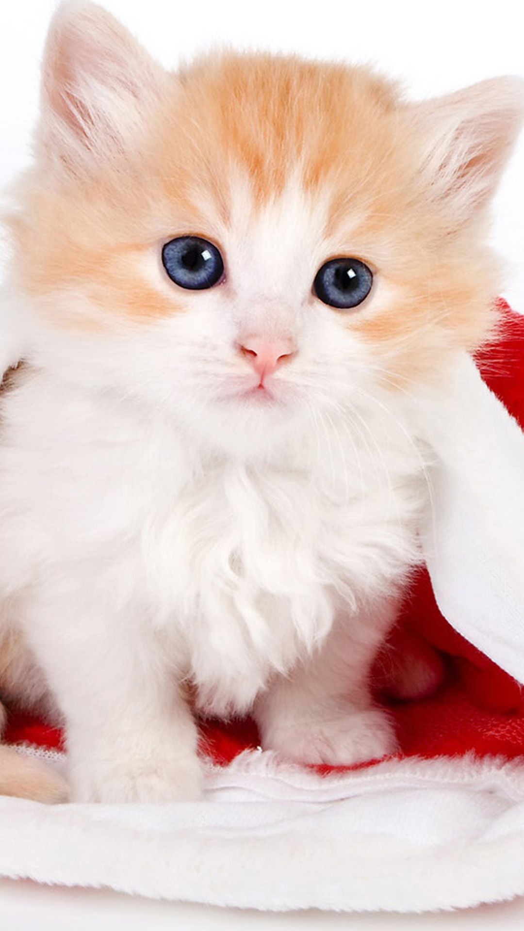 Wallpaper iphone cute cat - Cute Lovely Christmas Hat Kitten Iphone 6 Plus Wallpaper