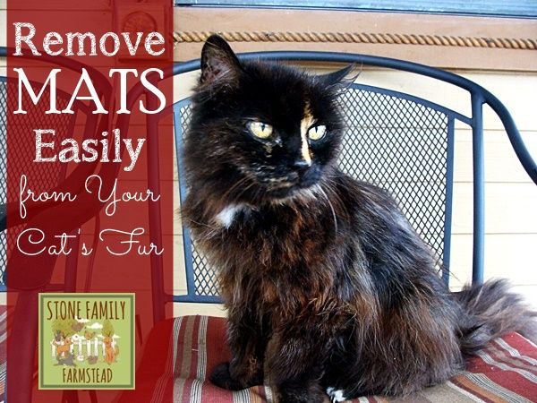 Matted Cat Fur Solution For Senior Cats Pets Matted