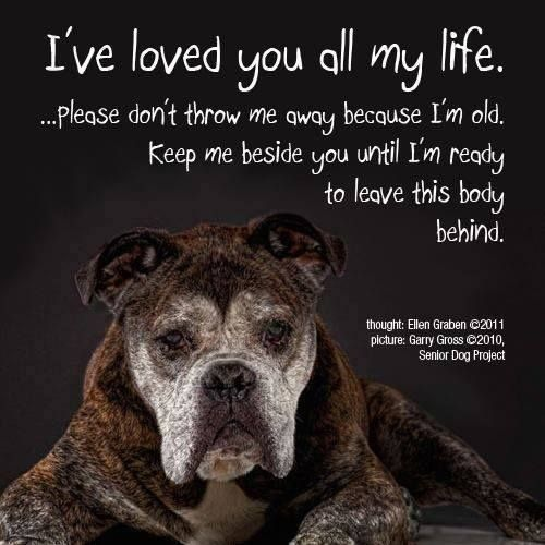 Cute Puppies Old Dogs Dogs Dog Quotes