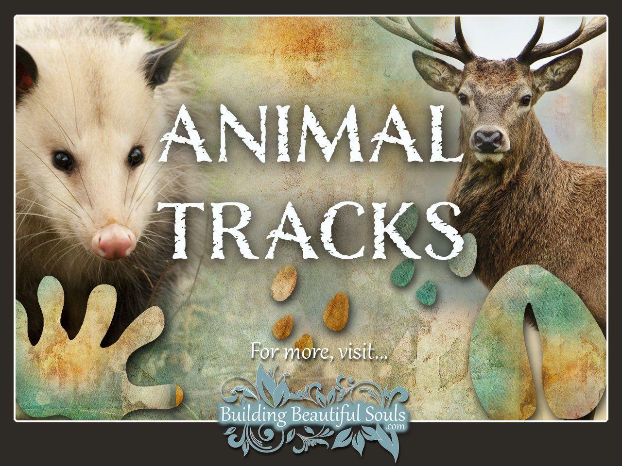 Animal Footprints Amp Track Identification