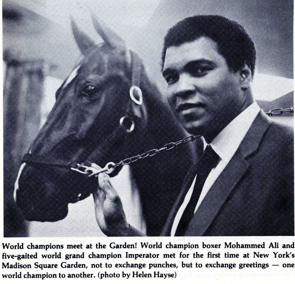 American Saddlebred, CH Imperator and boxer Mohammed Ali