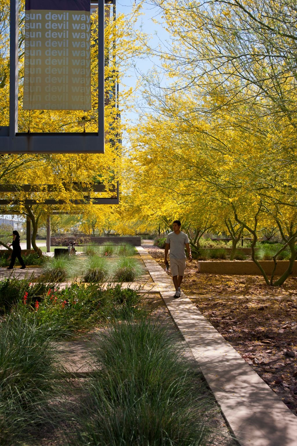 Arizona State University Polytechnic Campus By Ten Eyck Landscape Architects