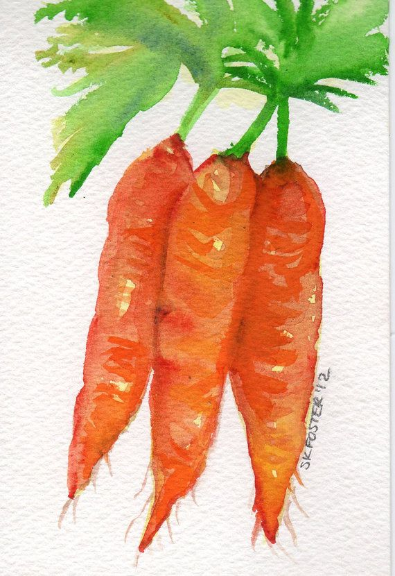 Watercolor Carrots Watercolor Fruit Watercolor Food Watercolor Art