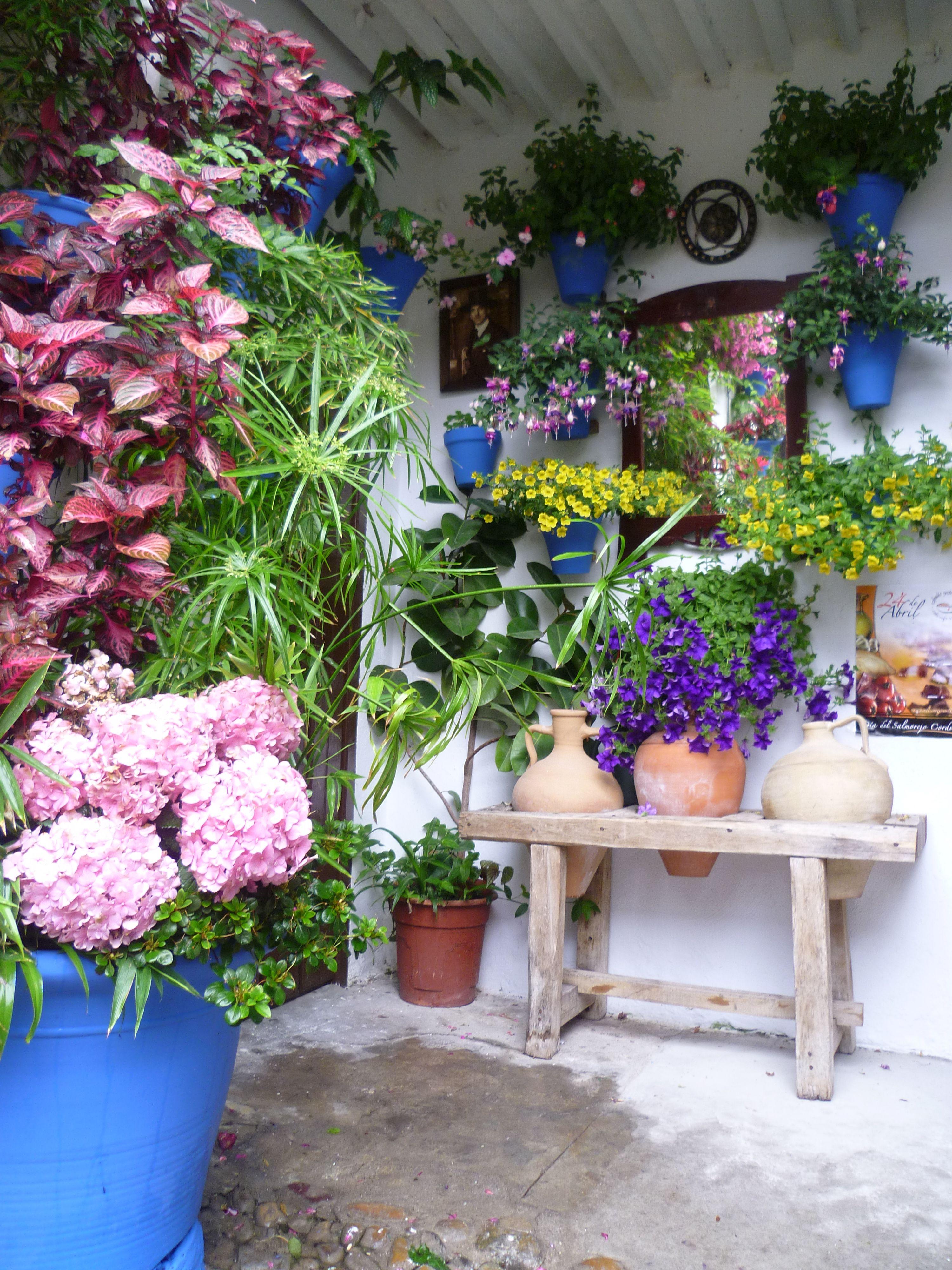 Los Patios Cordobeses Blue Flowering Plants Unique Gardens Planting Flowers