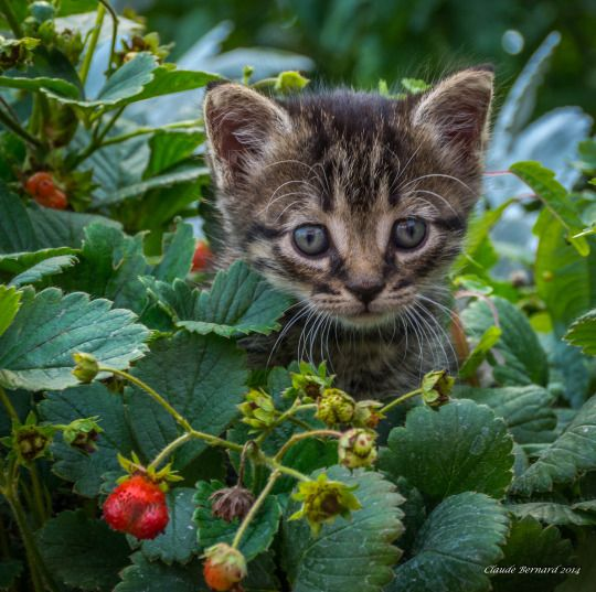 On the hunt for wild berries...